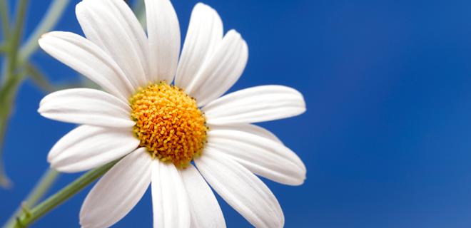 basic-blomsterjord